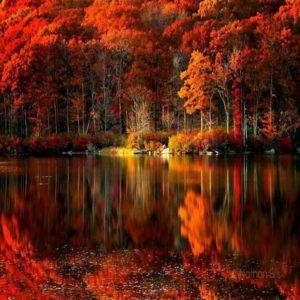 5dbc9645a6eee67f2937112f2425ee49 fall on autumn fall